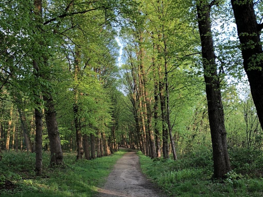 Grebbeberg bos