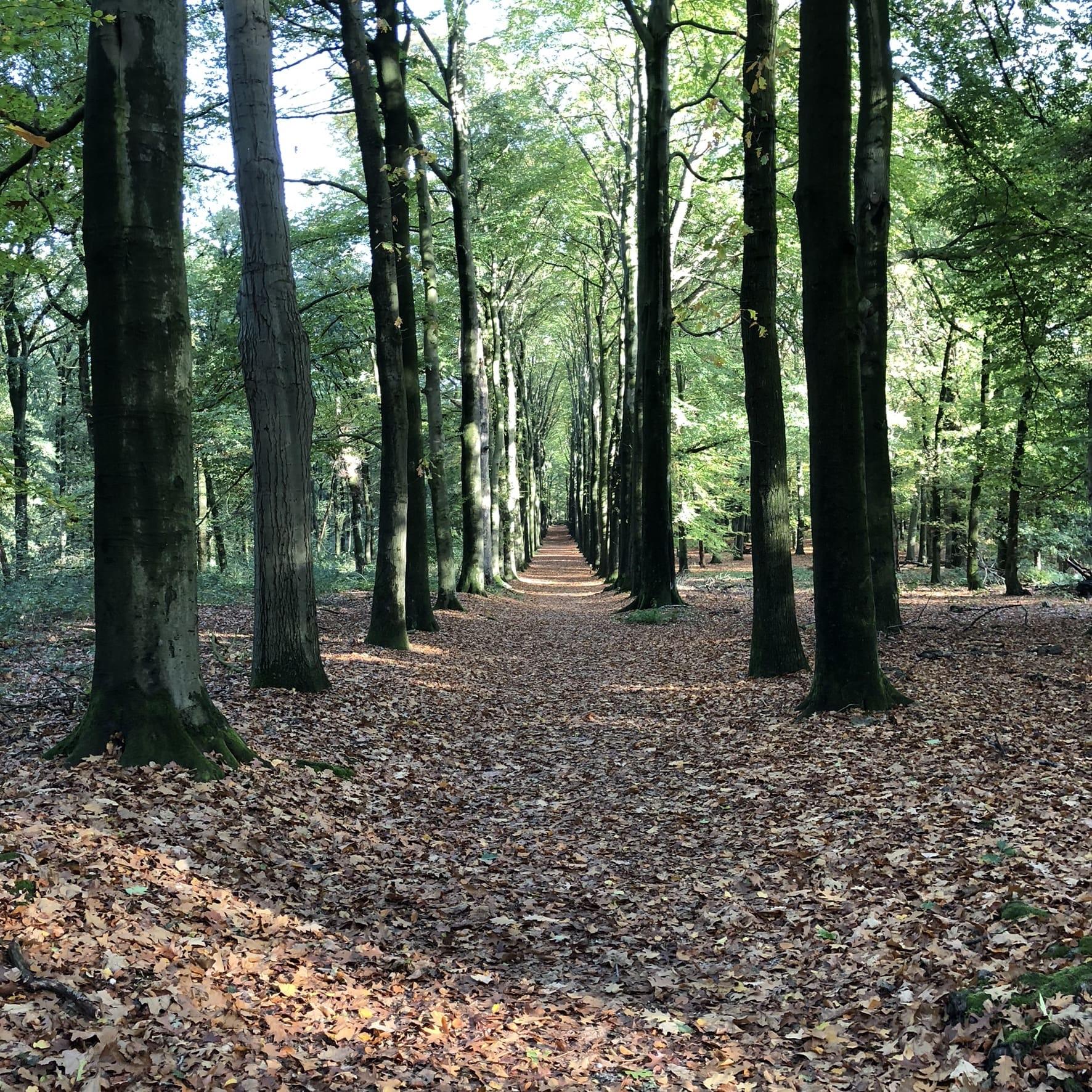 Boswandeling Utrechtse Heuvelrug