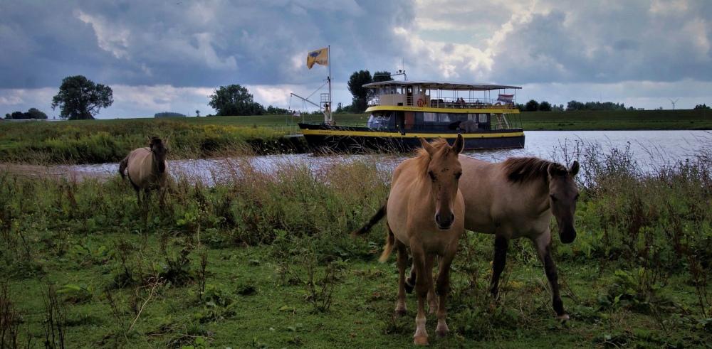 Safarischip Blauwe Bever Rhenen