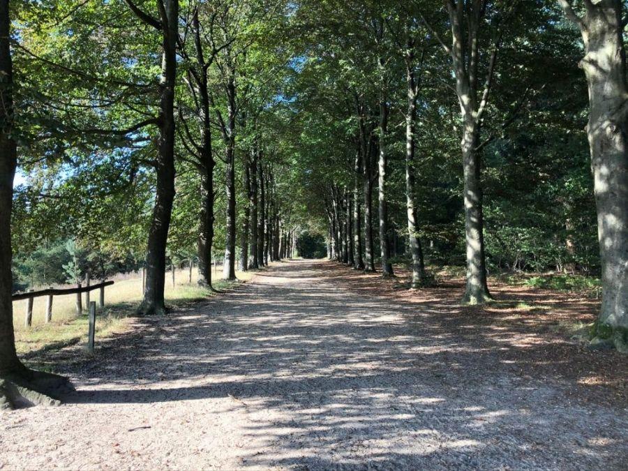 Wandelroute Dikkenberg Kwintelooijen (1)