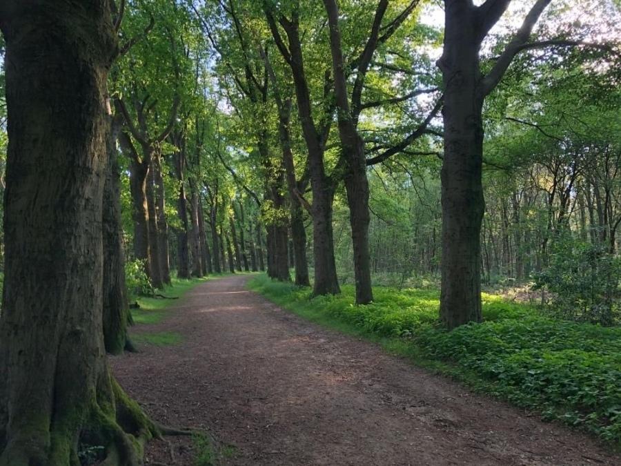 Gemarkeerde wandelroute Laarsenberg