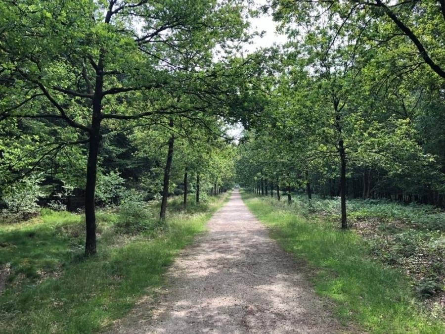 Wandelroute Hoog en Laag Amerongse bos