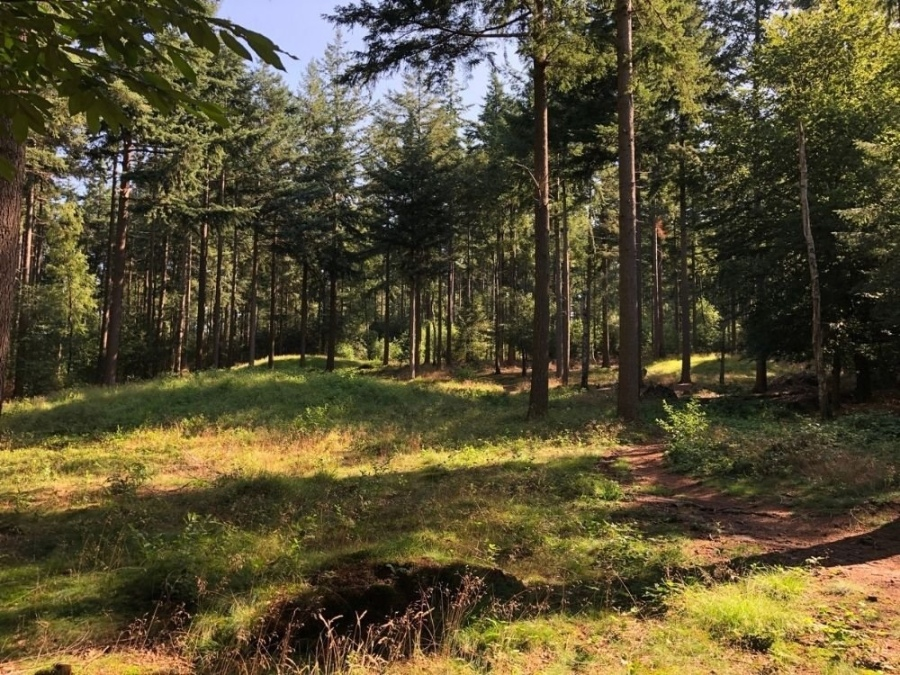 Trage Tocht Veenendaal Amerongse bos