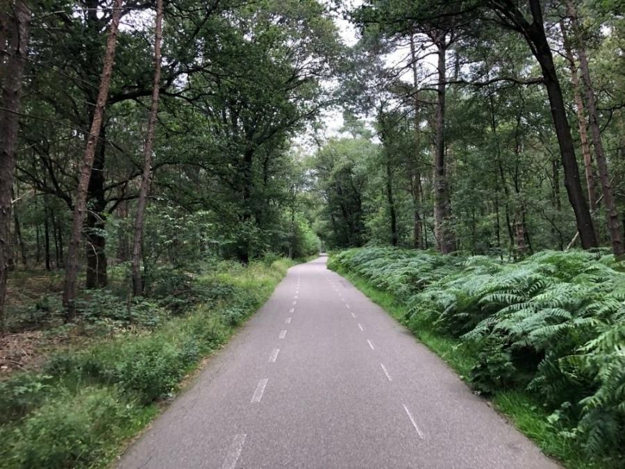 Fietsroute Utrechtse Heuvelrug Rhenen