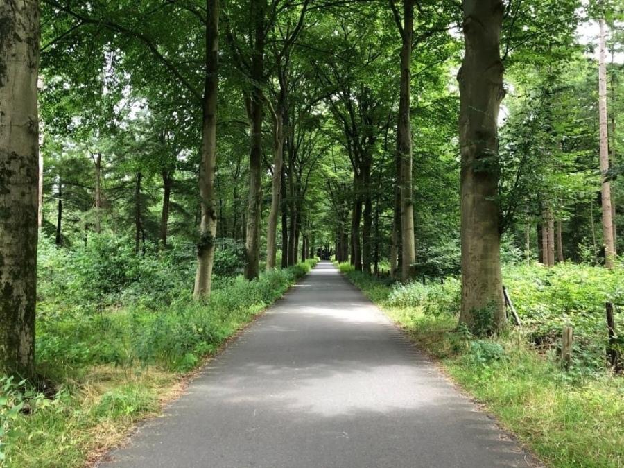 Fietsen Utrechtse Heuvelrug Rhenen